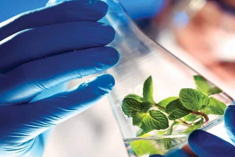 زیست فناوری راه حلی برای تأمین غذای کافی و سالم